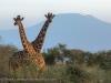 201209_Amboseli_8