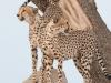 201111_Botswana_1271-669x445-copy