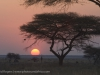 Namibia, Onguma © David Rogers
