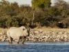 201106_Namibia_4404