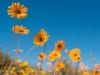 201409_flowers0566