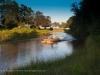South Luangwa, Emerald Season Photographic Workshop, puku in a river bed. Zambia