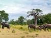 201203_Luangwa2_671-Edit