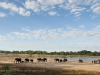 Zambia, South Luangwa, group of elephant seen near Luangwa River © David Rogers