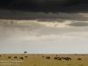 Kenya, Maasai Mara