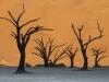 201106_Namibia_2072