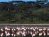200802_Serengeti_1060