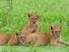 200802_Serengeti_1119