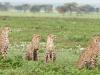 200802_Serengeti_1234