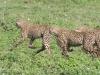 200802_Serengeti_1310