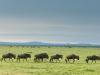 200802_Serengeti_774