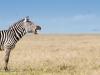 200802_Serengeti_860