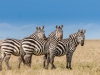 200802_Serengeti_866