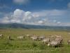 200802_ngorongoro_212