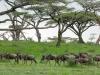 200802_serengeti_671