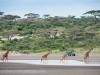 201002_Tanzania_2410