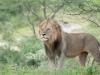 201002_tanzania_2193