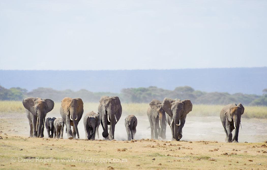 201308_Amboseli542