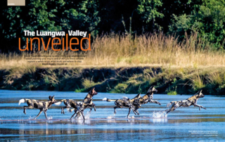 The luangwa valley unveiled