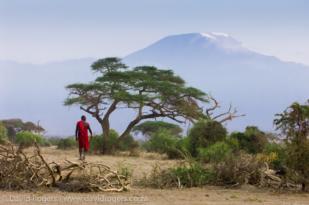 Kenya, Amboseli National Park, Masai man with view of Kilimanjaro in the background. © David Rogers
