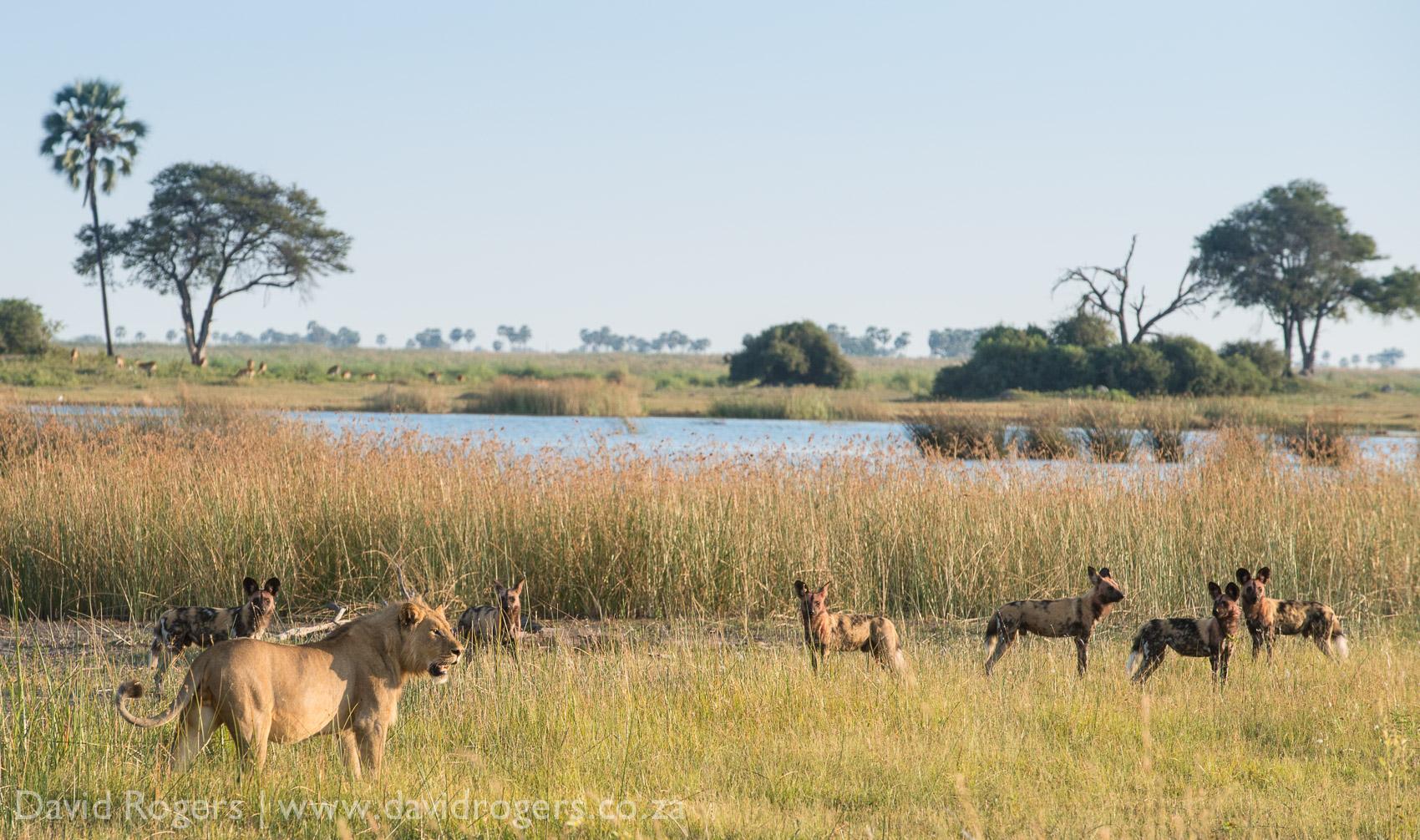 201304_Botswana1137