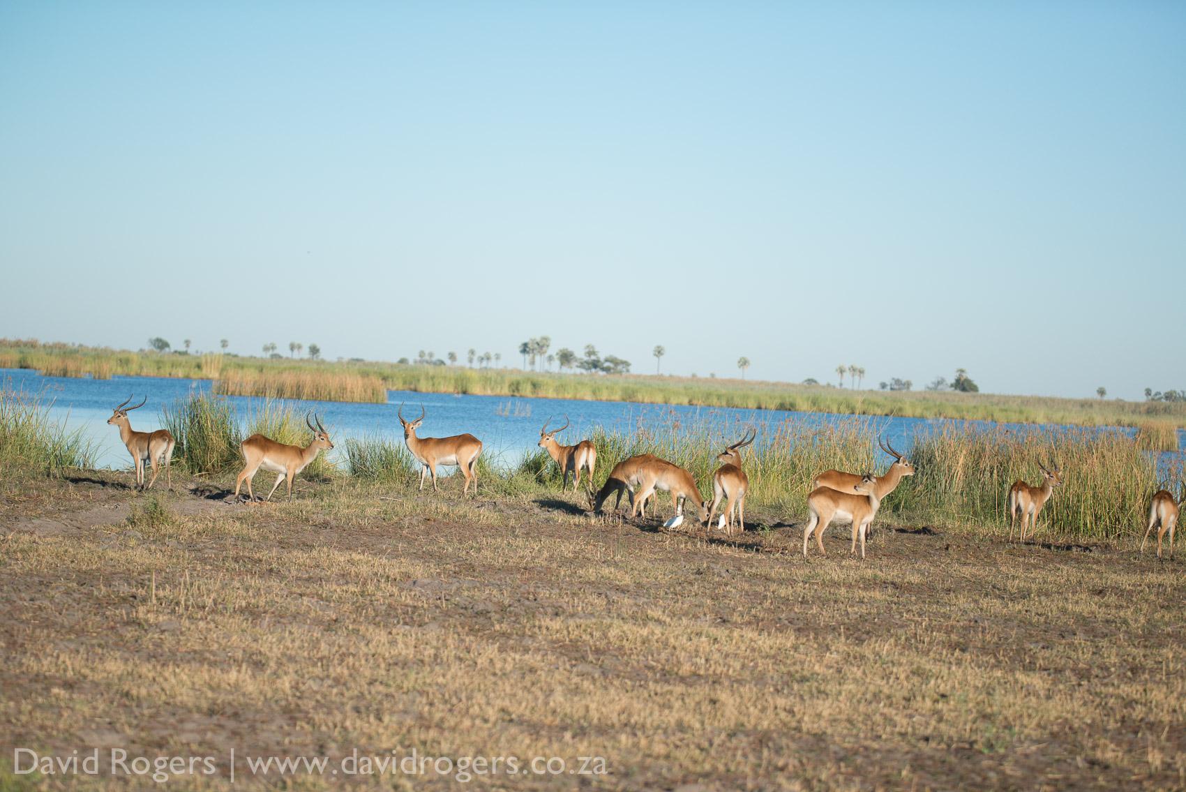201304_Botswana886