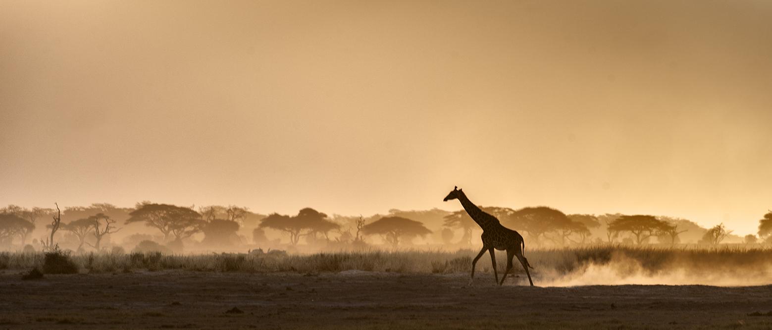 201109_Amboseli_447
