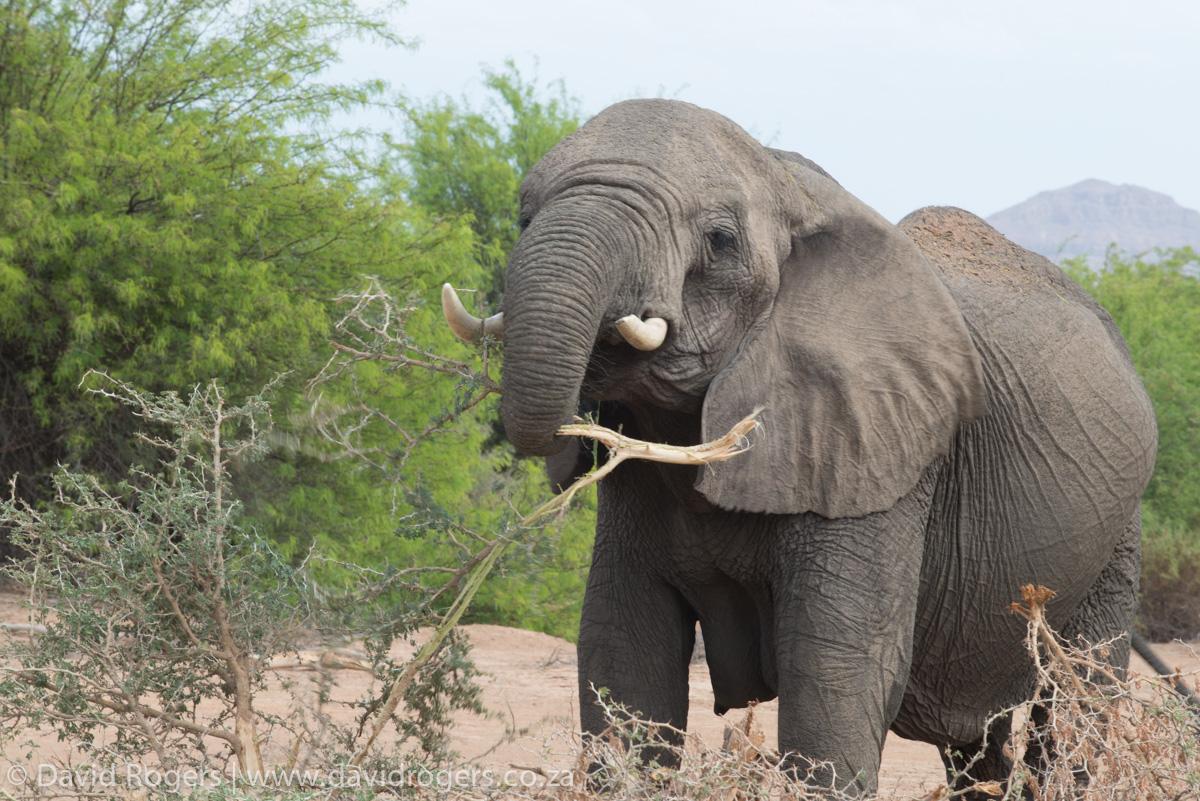 201211_Namibia_1105