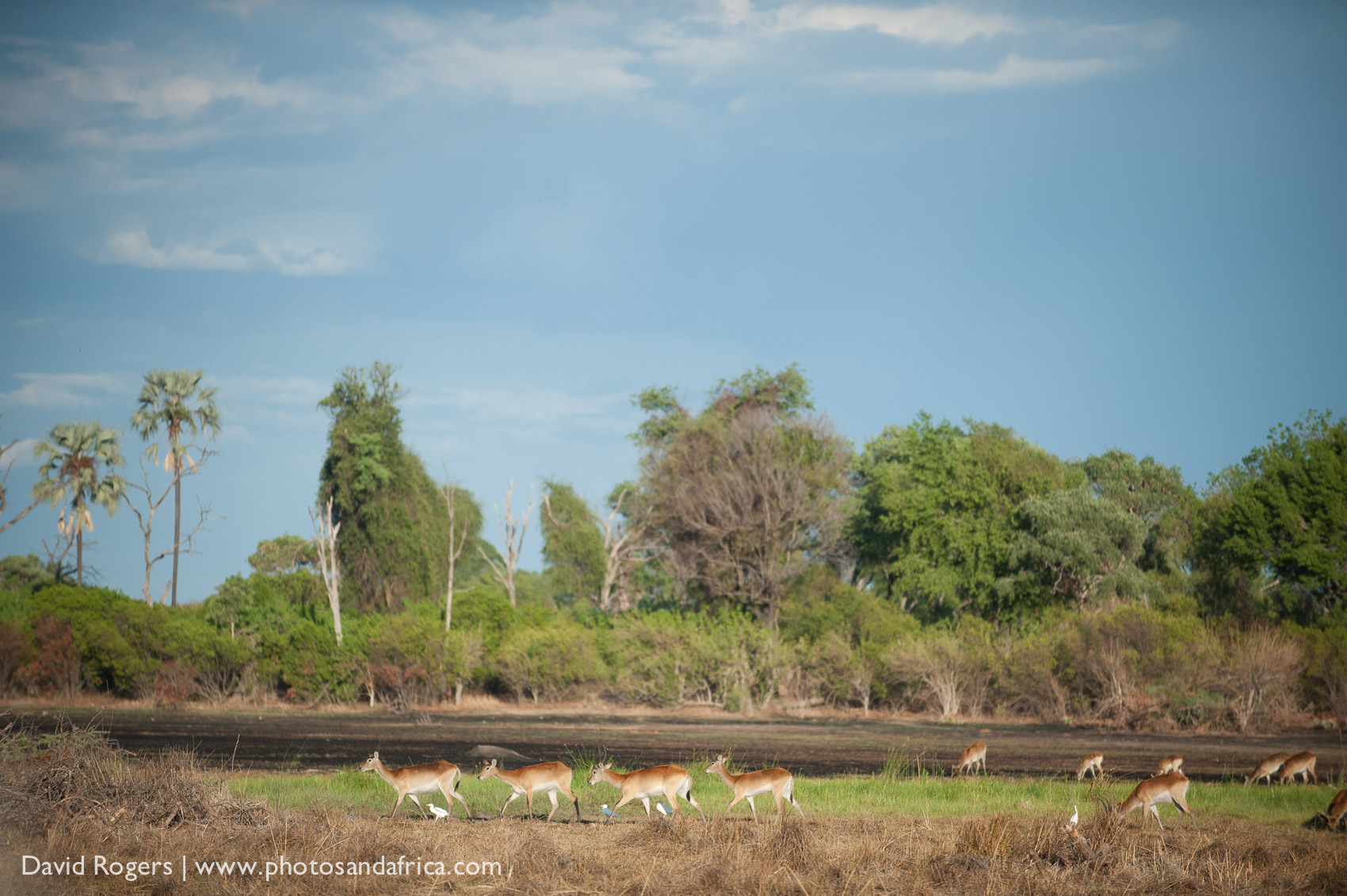 201311_Botswana_925