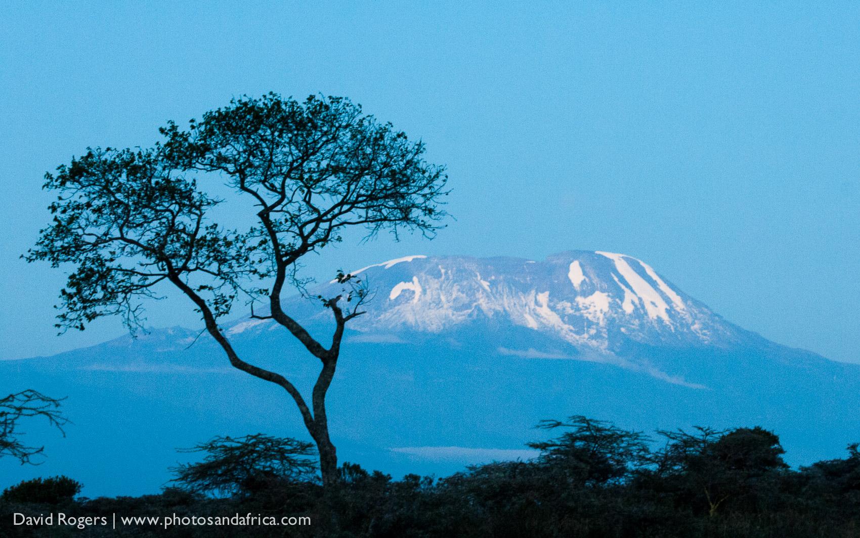 Hatari, Kenya