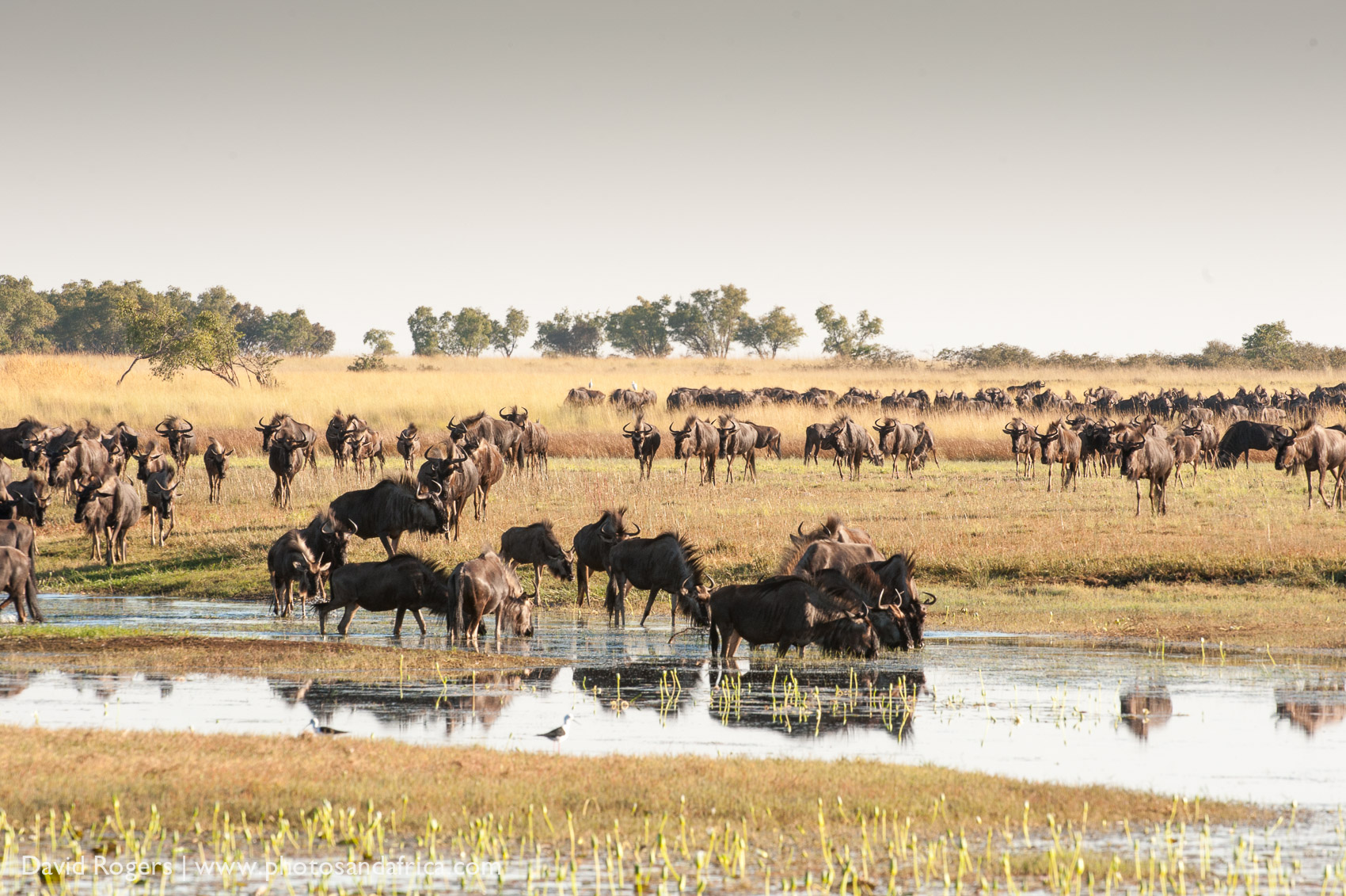 Liuwa Plains National Park, Zambia