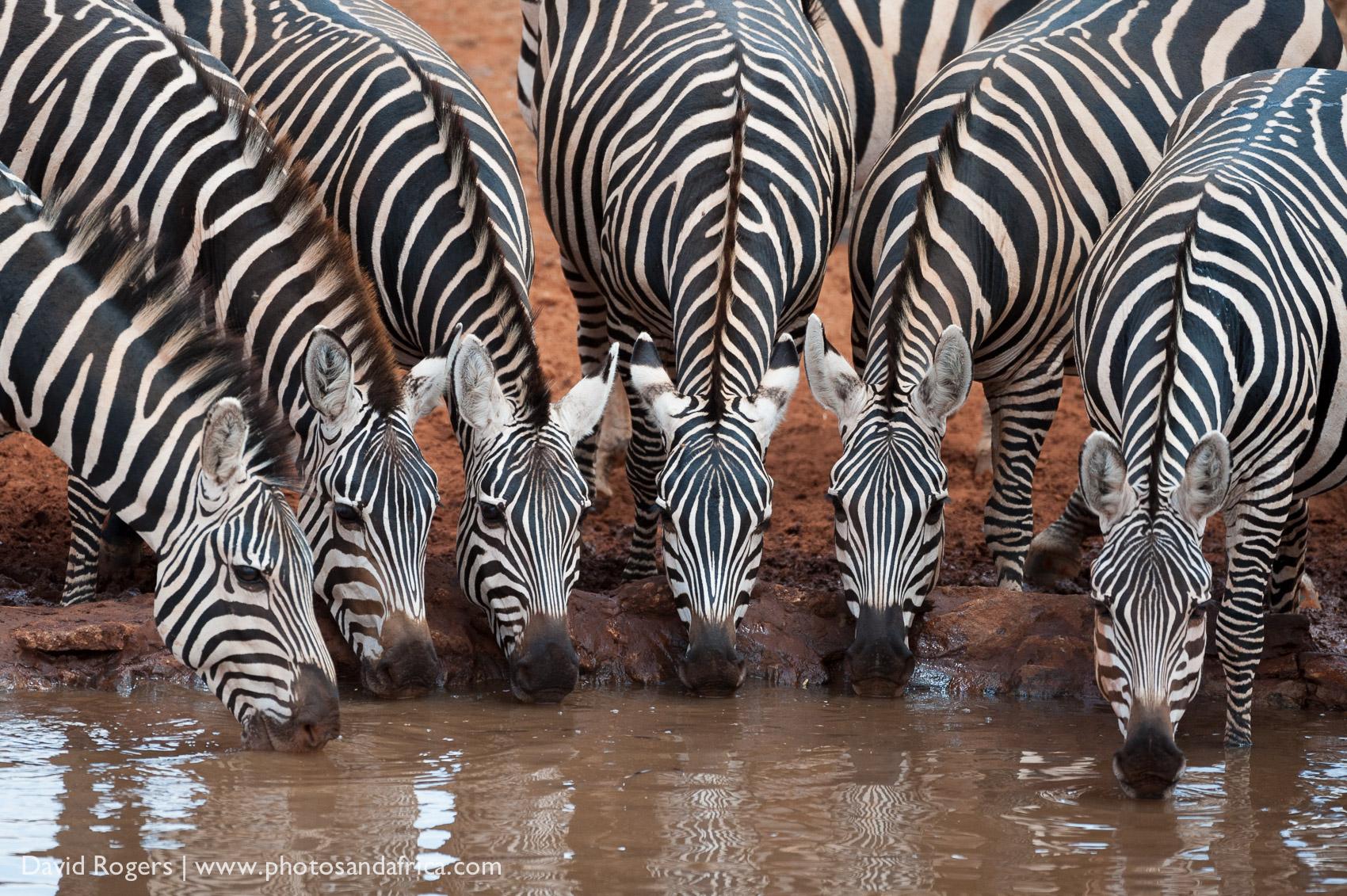 201209_Amboseli_82