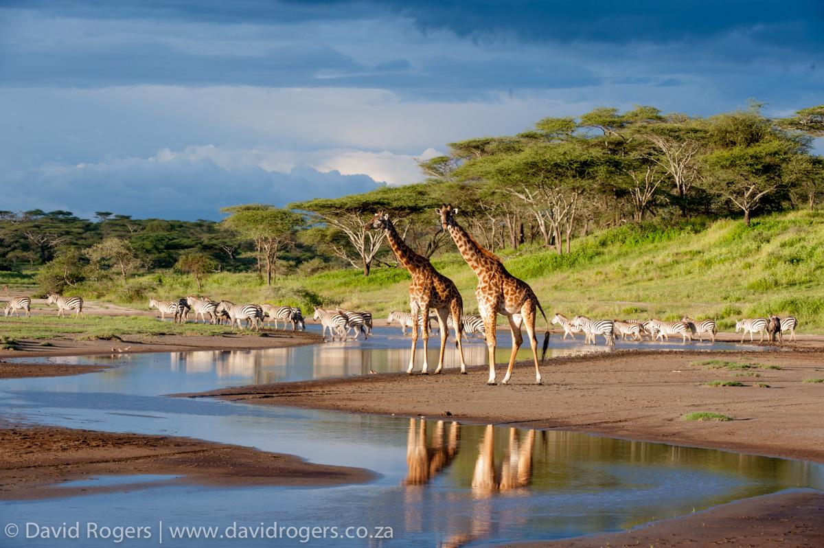 Amazing Tanzania, Tanzania