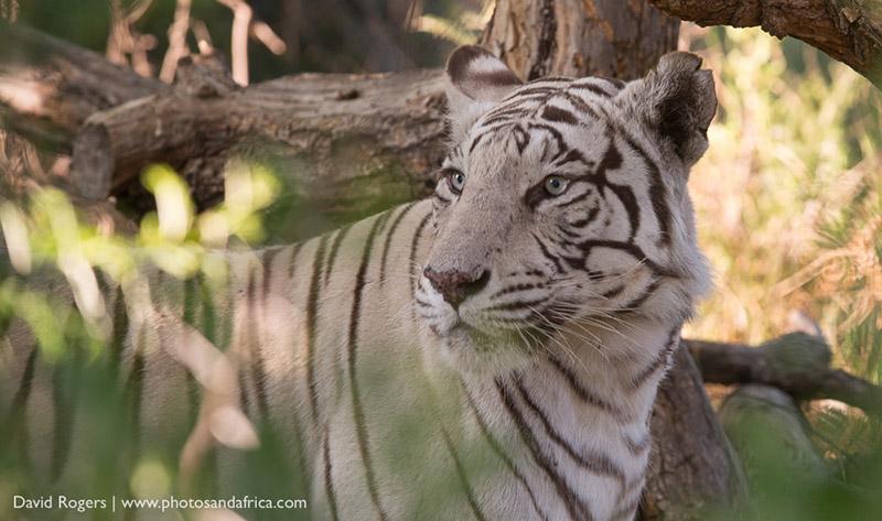 201511_TigerCanyon_0878