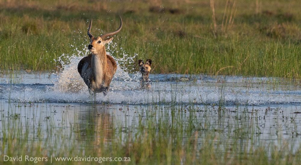 Mapula, Okavango, David Rogers
