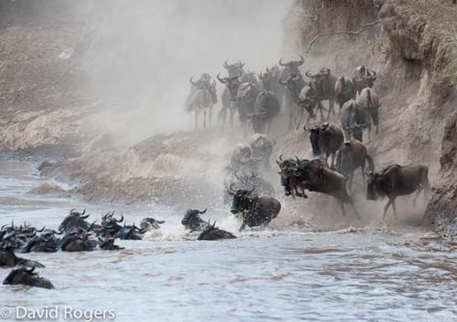 River crossing in the Mara