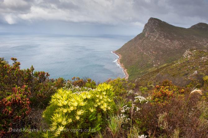 Cape Town & Agulhas (5 Days)