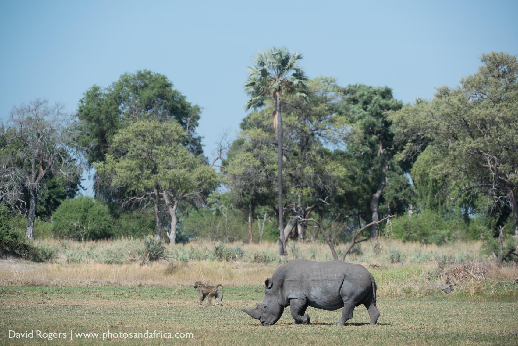 201311_Botswana_982