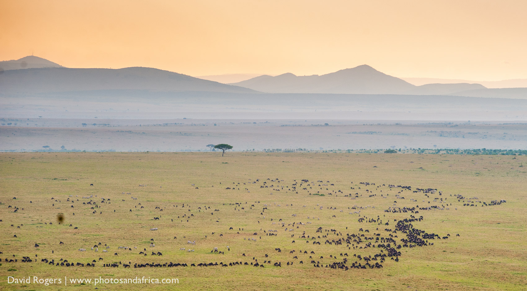 View of the wildebeest herds in the Masai Mara migration from a baloon