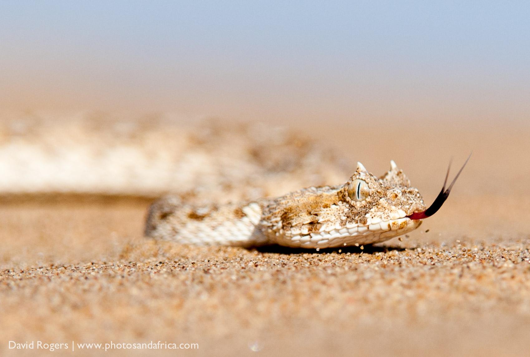 201211_Namibia_1401