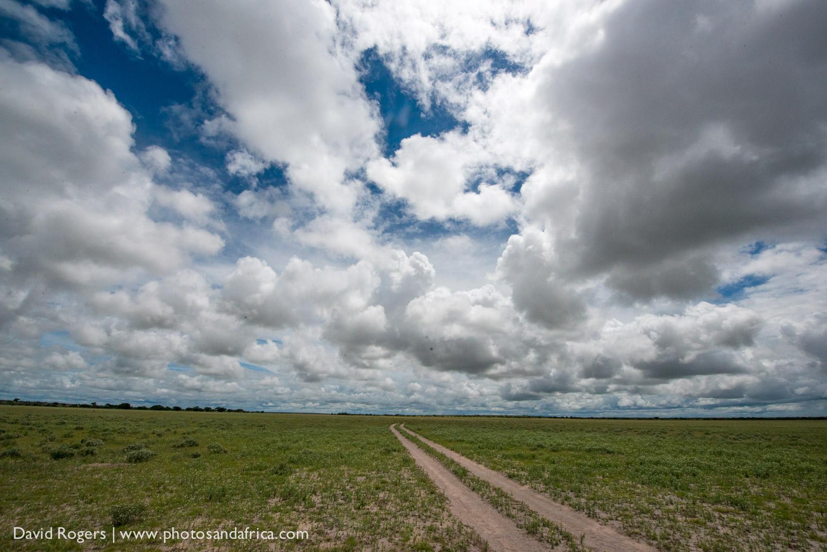 Kalahari Plains