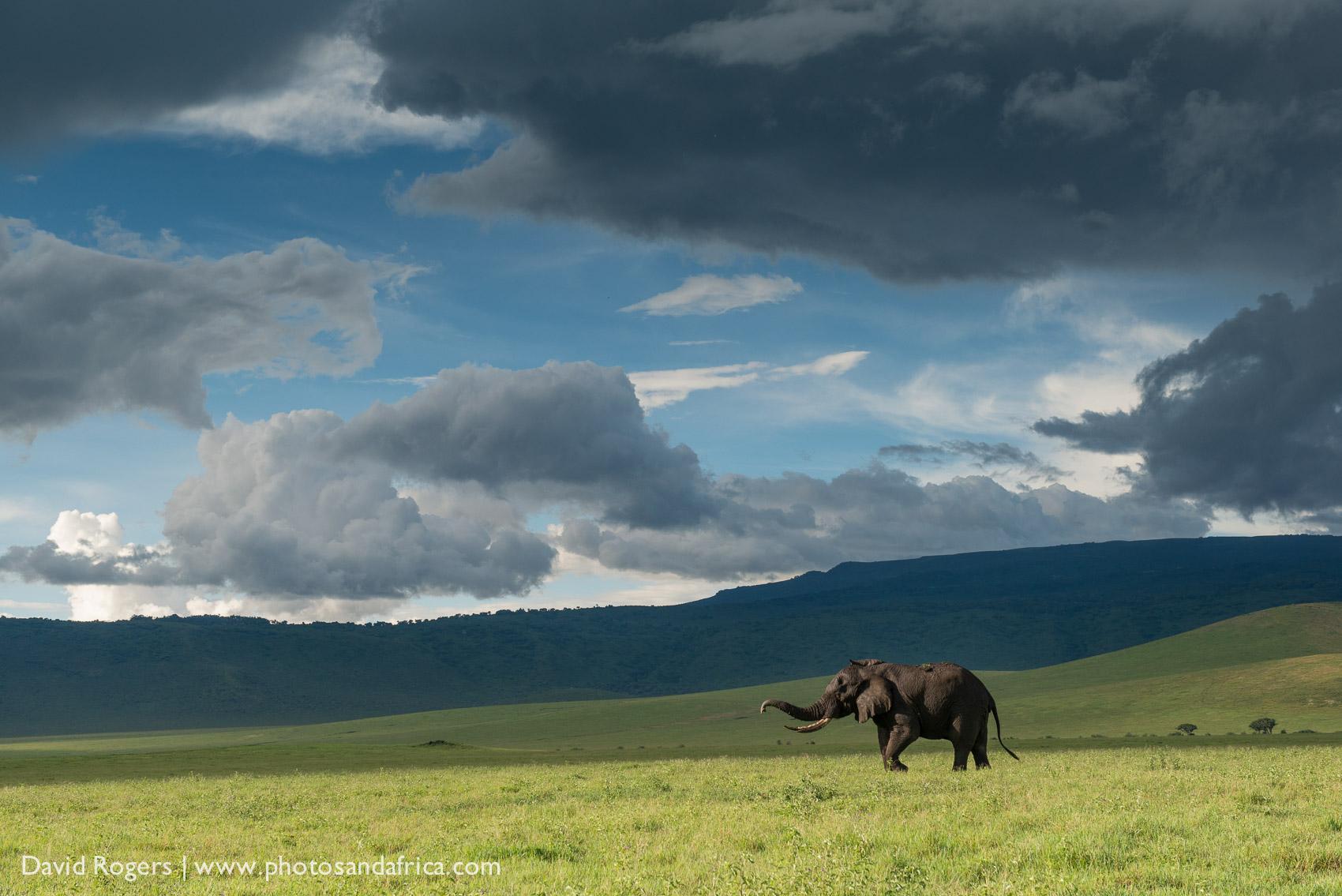 Tanzania Photos And Africa