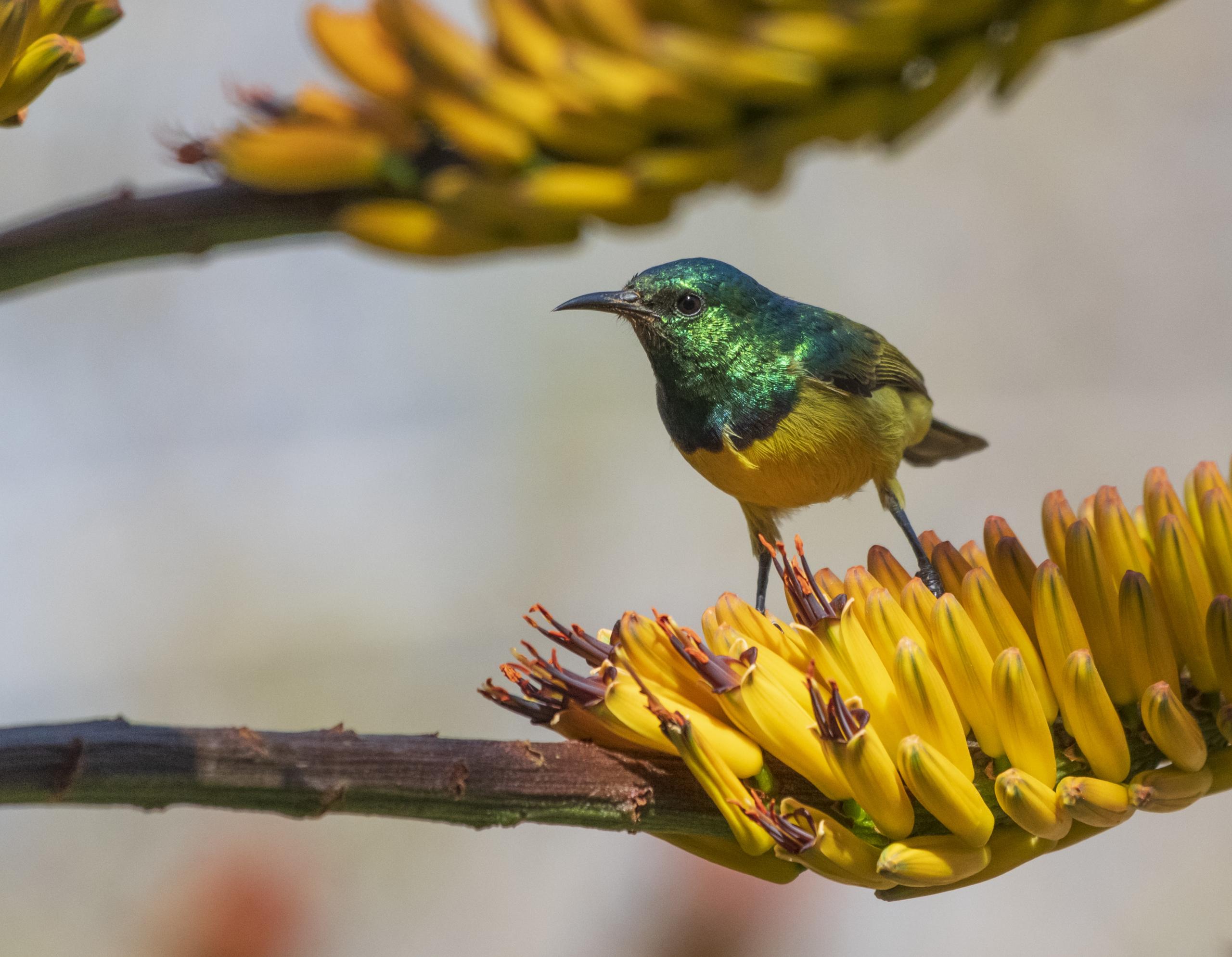 Umlani Bush Camp bird watching